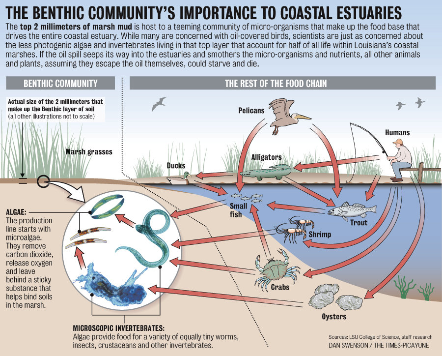 Bp Oil Disaster Benthic Communitys Importance To Coastal